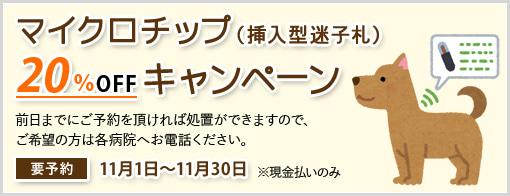 マイクロチップ(挿入型迷子札) キャンペーン