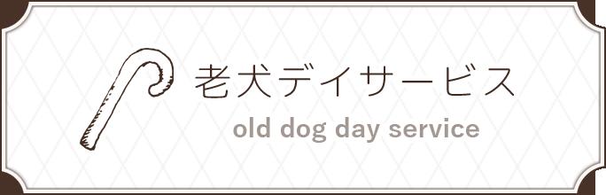 老犬デイサービス